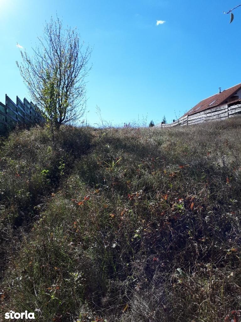 Teren de Vanzare, Ilfov (judet), Strada Școlii - Foto 11