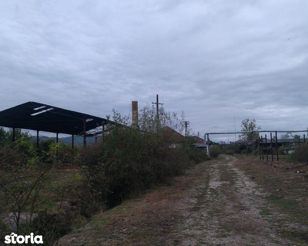 Teren de Vanzare, Maramureș (judet), Mireşu Mare - Foto 6