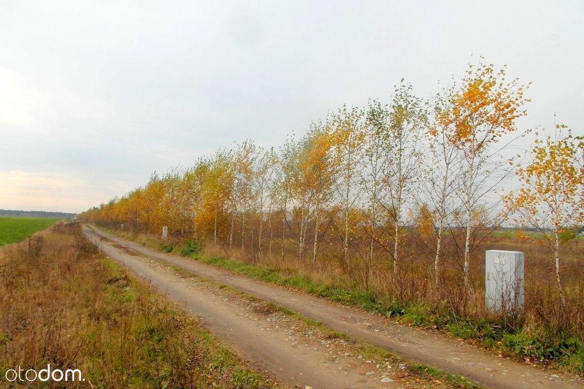 Działka na sprzedaż, Radzewo, poznański, wielkopolskie - Foto 4