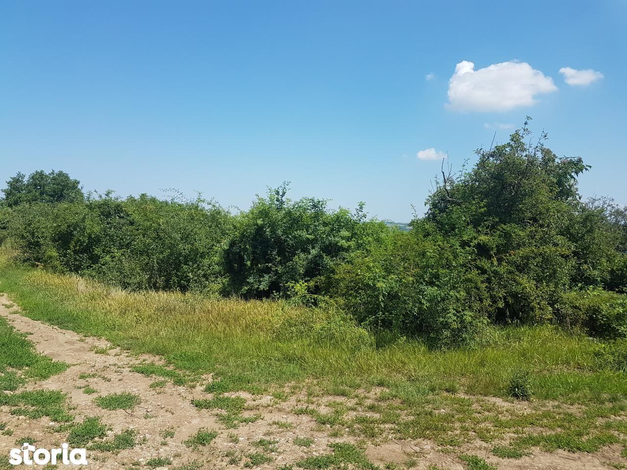 Teren de Vanzare, Bihor (judet), Paleu - Foto 11