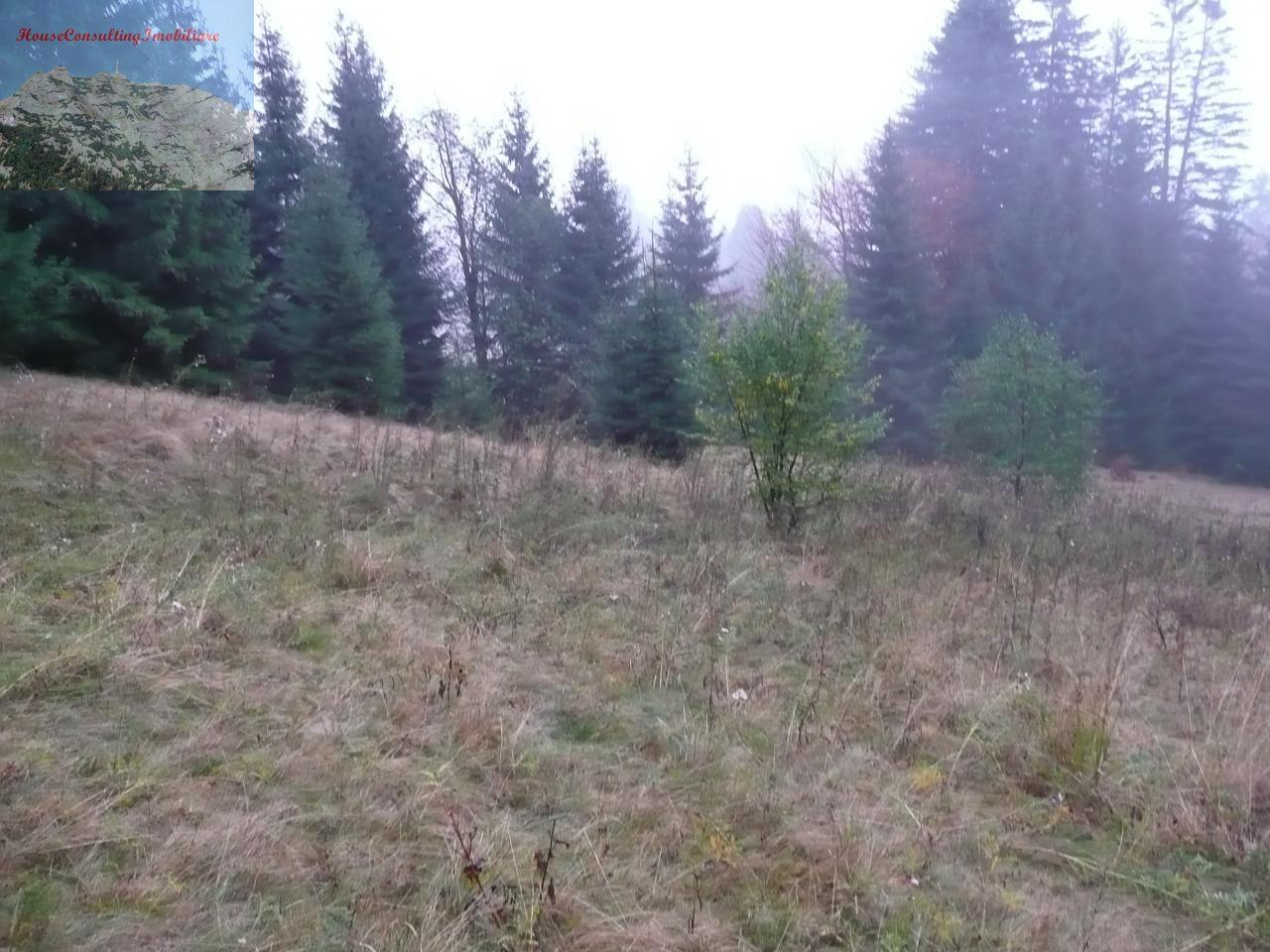 Teren de Vanzare, Brașov (judet), Predeal - Foto 2