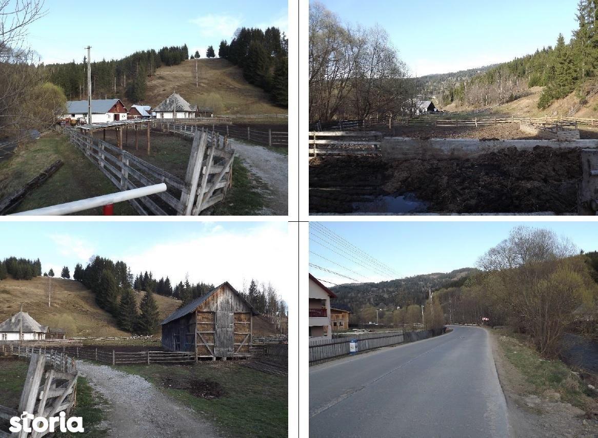 Teren de Vanzare, Suceava (judet), Panaci - Foto 1
