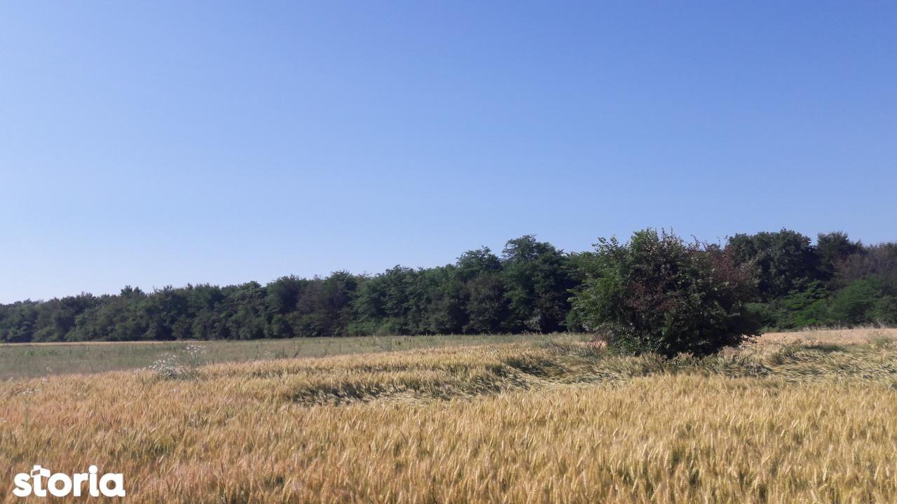 Teren de Vanzare, Ilfov (judet), Petrăchioaia - Foto 2