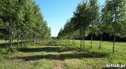 Działka na sprzedaż, Natalin, grójecki, mazowieckie - Foto 3