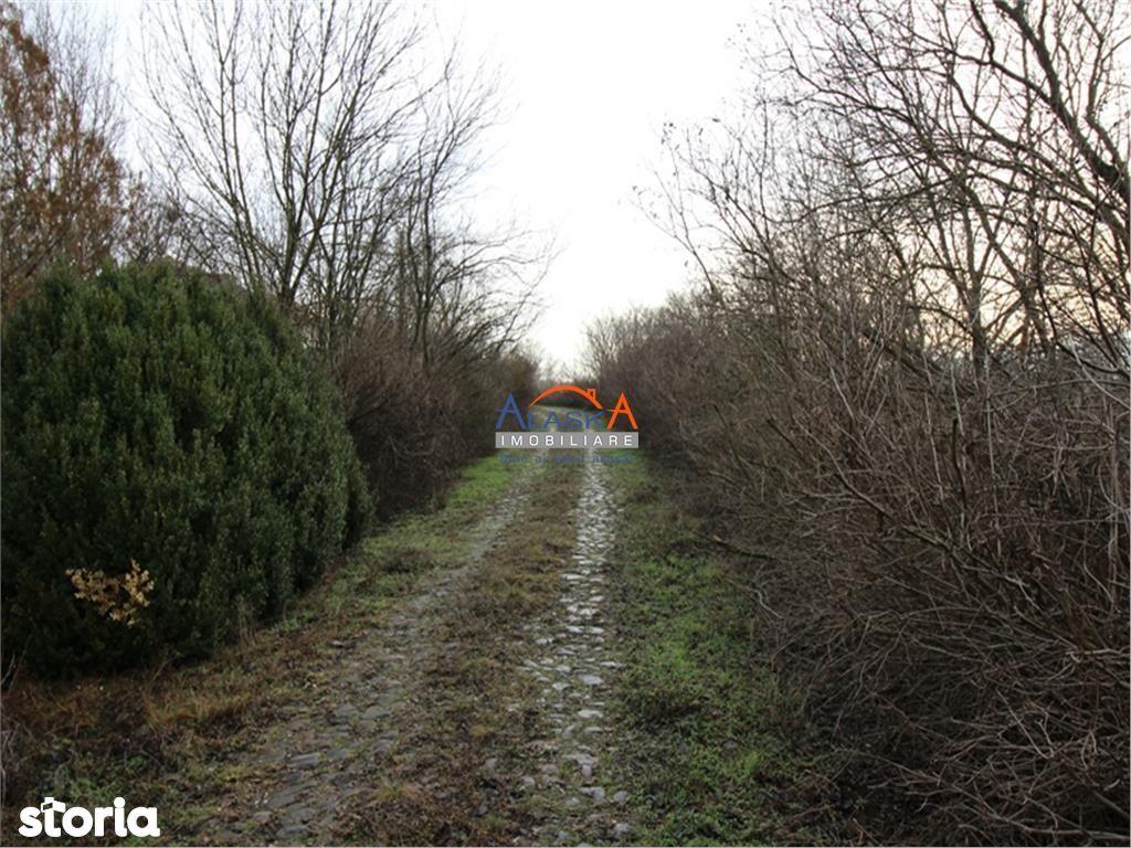 Teren de Vanzare, Iași (judet), Ciorteşti - Foto 15