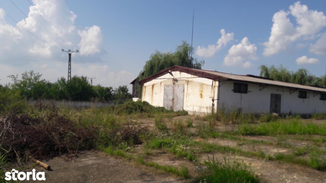 Depozit / Hala de vanzare, Timiș (judet), Remetea Mare - Foto 1