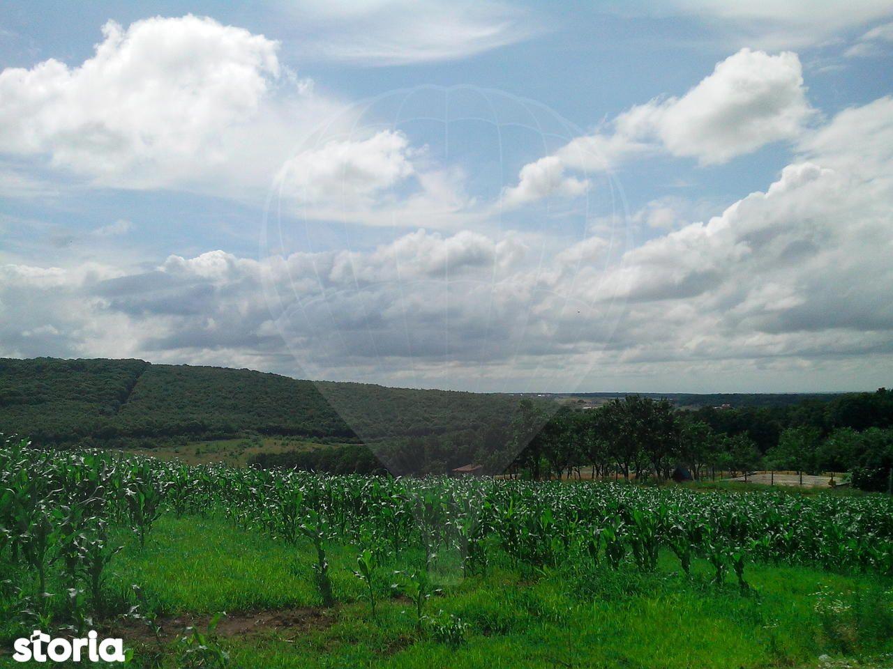 Teren de Vanzare, Bihor (judet), Betfia - Foto 7