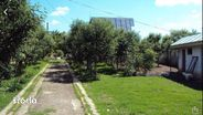 Teren de Vanzare, Giurgiu (judet), Gorneni - Foto 10