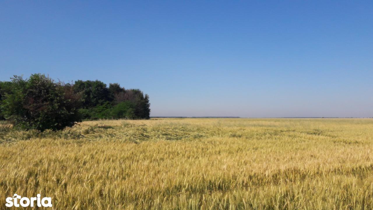Teren de Vanzare, Ilfov (judet), Petrăchioaia - Foto 1