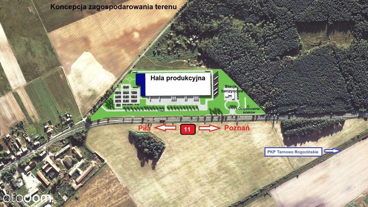 Działka na sprzedaż, Rogoźno, obornicki, wielkopolskie - Foto 9