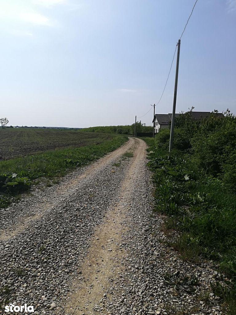 Teren de Vanzare, Ilfov (judet), Ciolpani - Foto 9