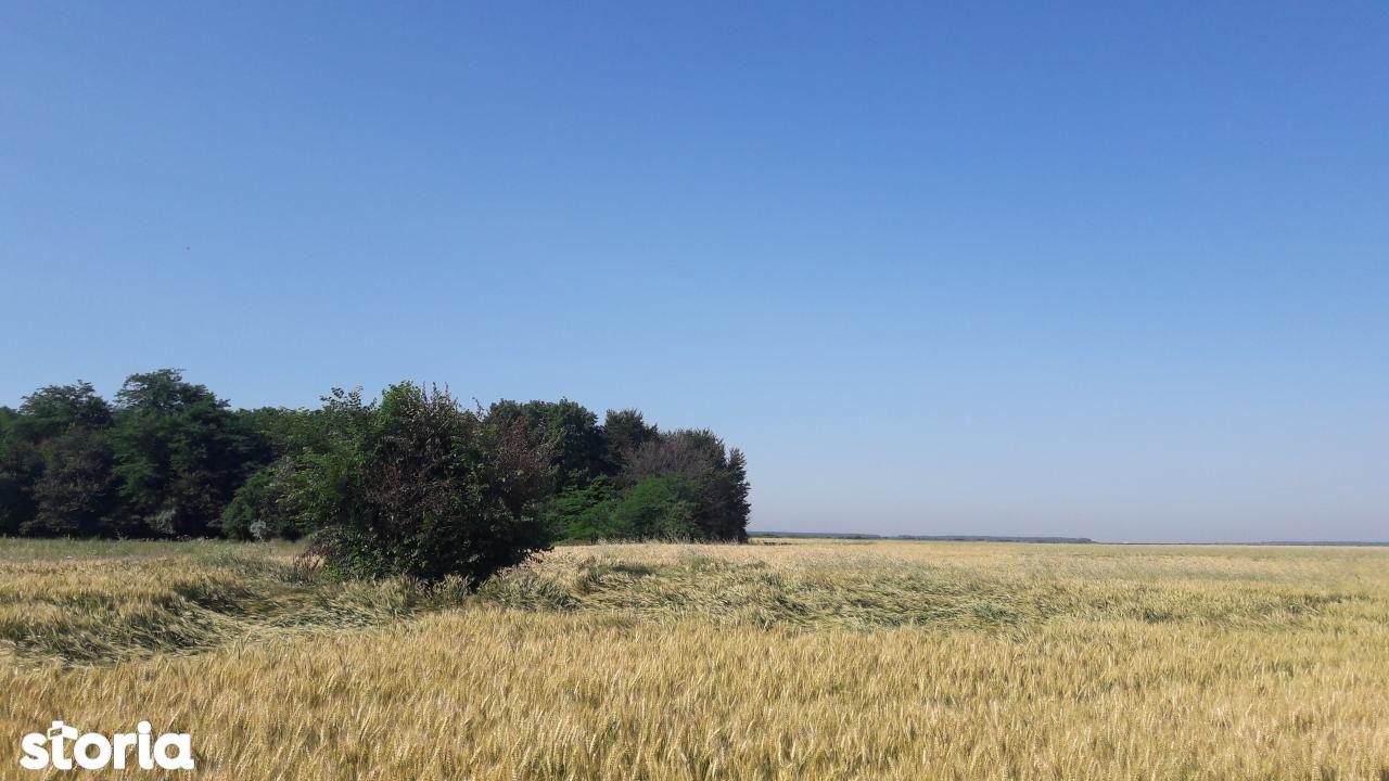 Teren de Vanzare, Ilfov (judet), Petrăchioaia - Foto 8