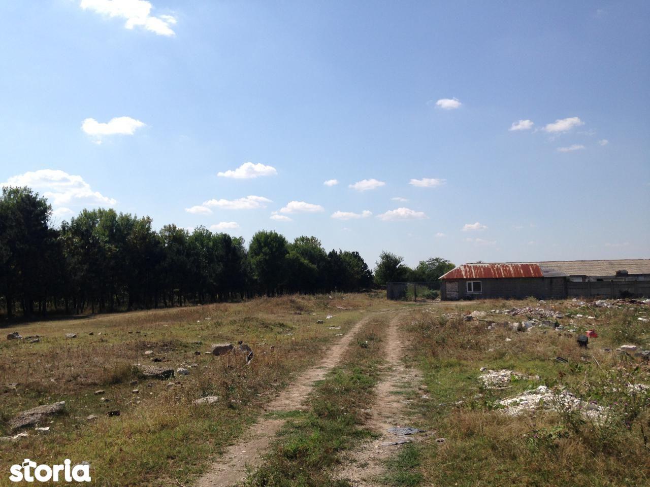 Depozit / Hala de vanzare, Dolj (judet), Craiova - Foto 5