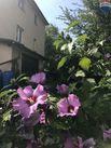 Dom na sprzedaż, Bielsko-Biała, śląskie - Foto 5