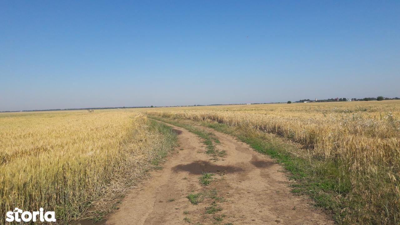 Teren de Vanzare, Ilfov (judet), Petrăchioaia - Foto 9