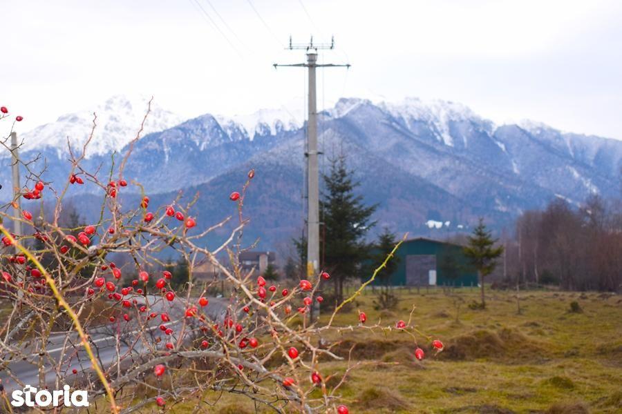 Teren de Vanzare, Brașov (judet), Râşnov - Foto 1