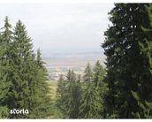 Teren de Vanzare, Brașov (judet), Strada 7 Izvoare - Foto 1