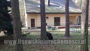 Dom na sprzedaż, Sokolniki-Las, zgierski, łódzkie - Foto 1