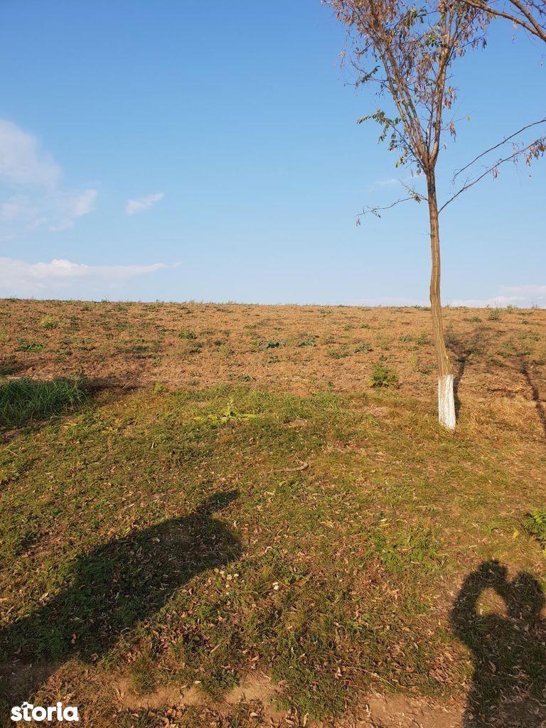 Teren de Vanzare, Bihor (judet), Oncea - Foto 2