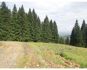 Teren de Vanzare, Brașov (judet), Strada 7 Izvoare - Foto 10