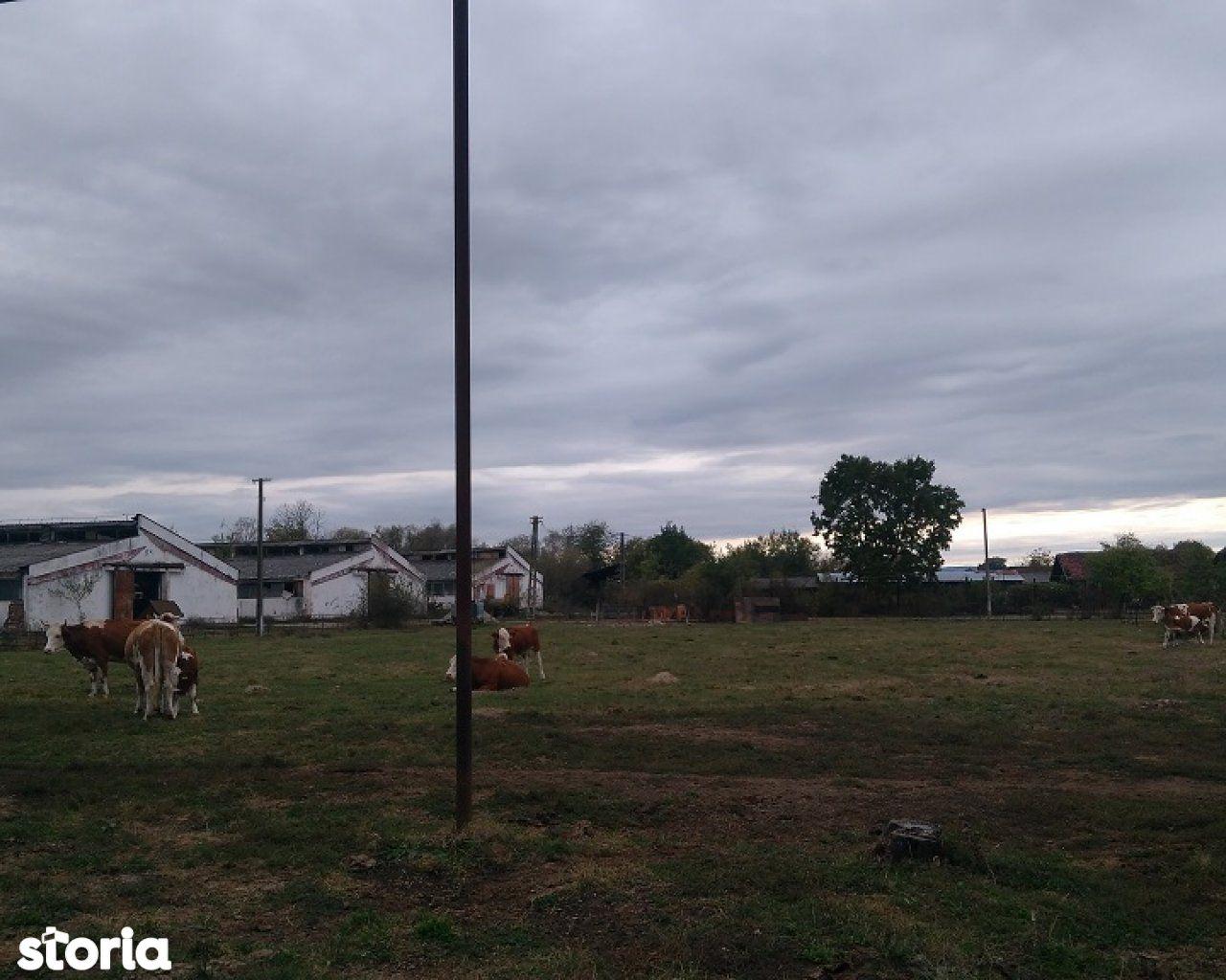 Teren de Vanzare, Maramureș (judet), Mireşu Mare - Foto 5