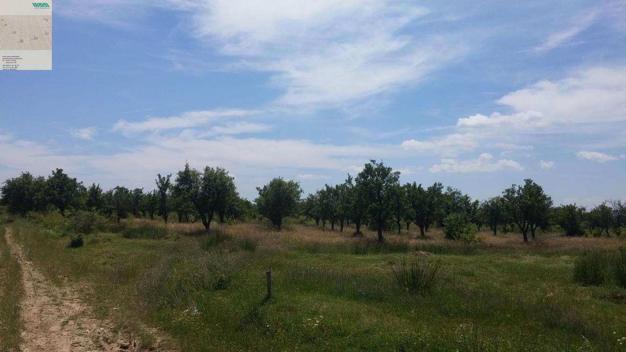 Teren de Vanzare, Vaslui (judet), Tutova - Foto 1