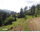 Teren de Vanzare, Brașov (judet), Strada 7 Izvoare - Foto 7