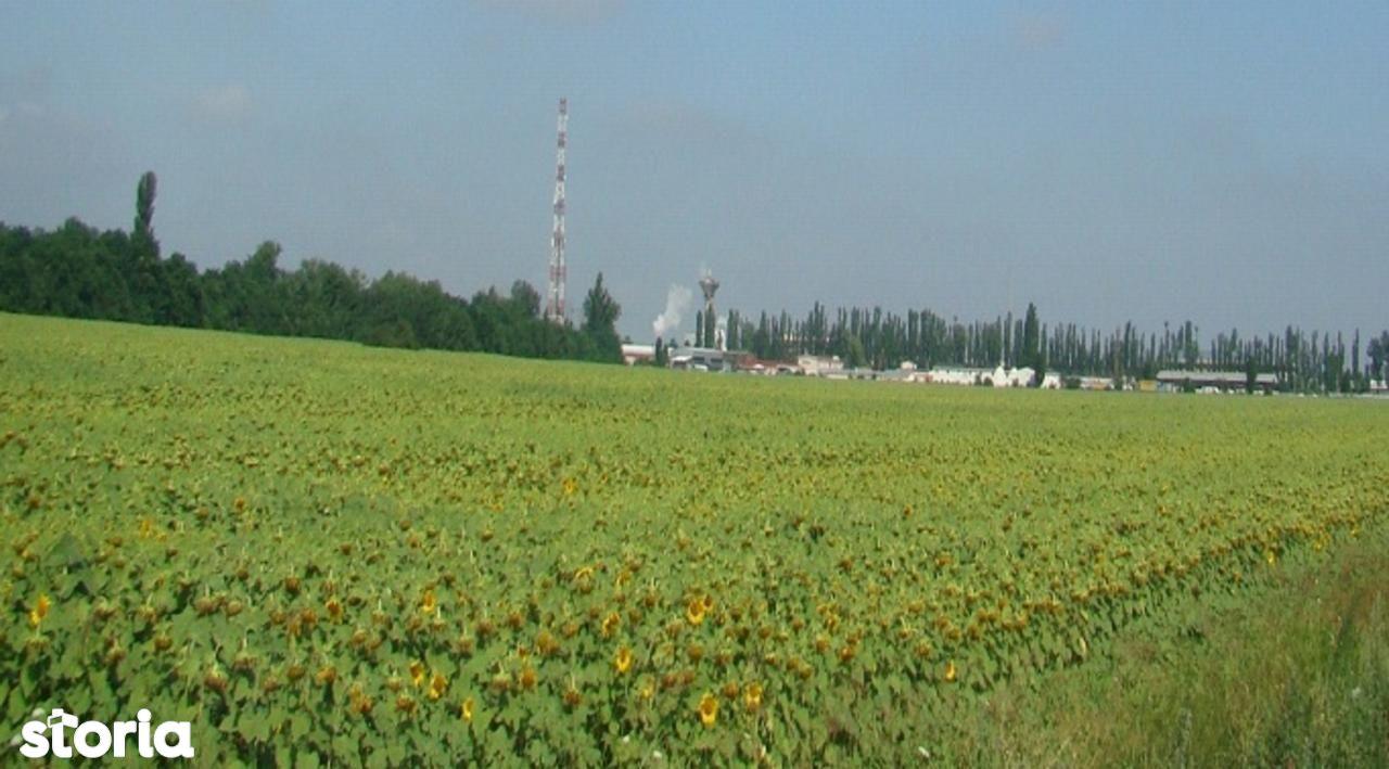 Teren de Vanzare, Ilfov (judet), Intrarea Crinilor - Foto 5