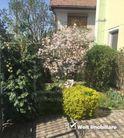 Casa de vanzare, Cluj (judet), Gheorgheni - Foto 5