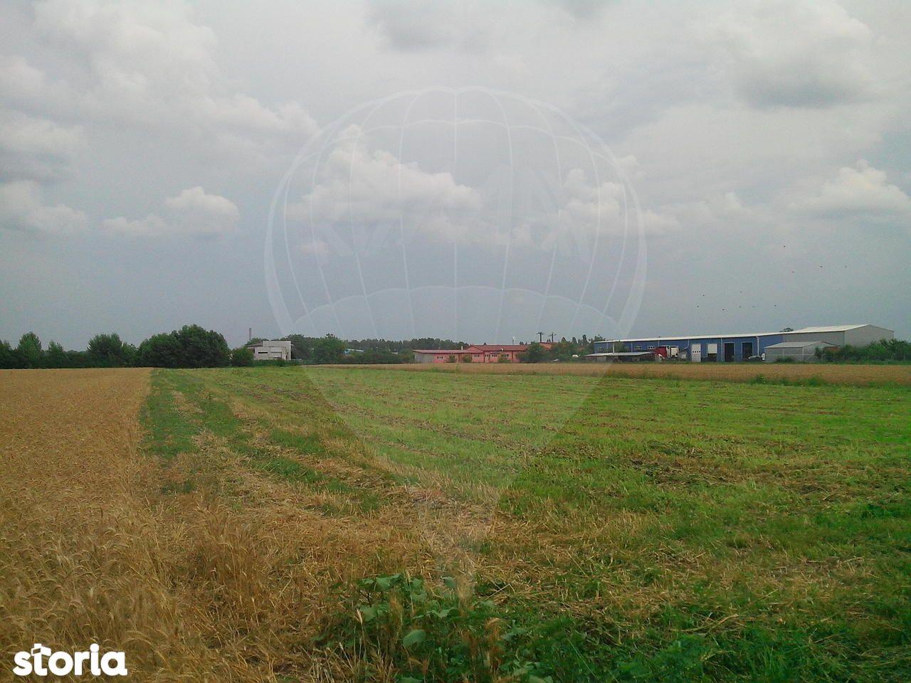 Teren de Vanzare, Bihor (judet), Sântion - Foto 5