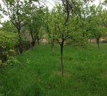 Teren de Vanzare, Alba (judet), Zlatna - Foto 1