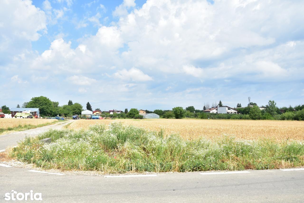 Teren de Vanzare, Ilfov (judet), Ciolpani - Foto 5