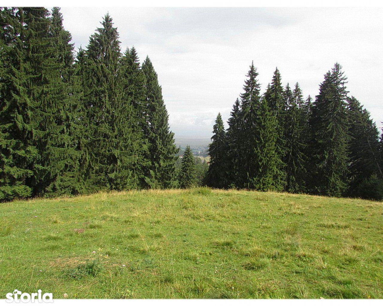 Teren de Vanzare, Brașov (judet), Strada 7 Izvoare - Foto 6