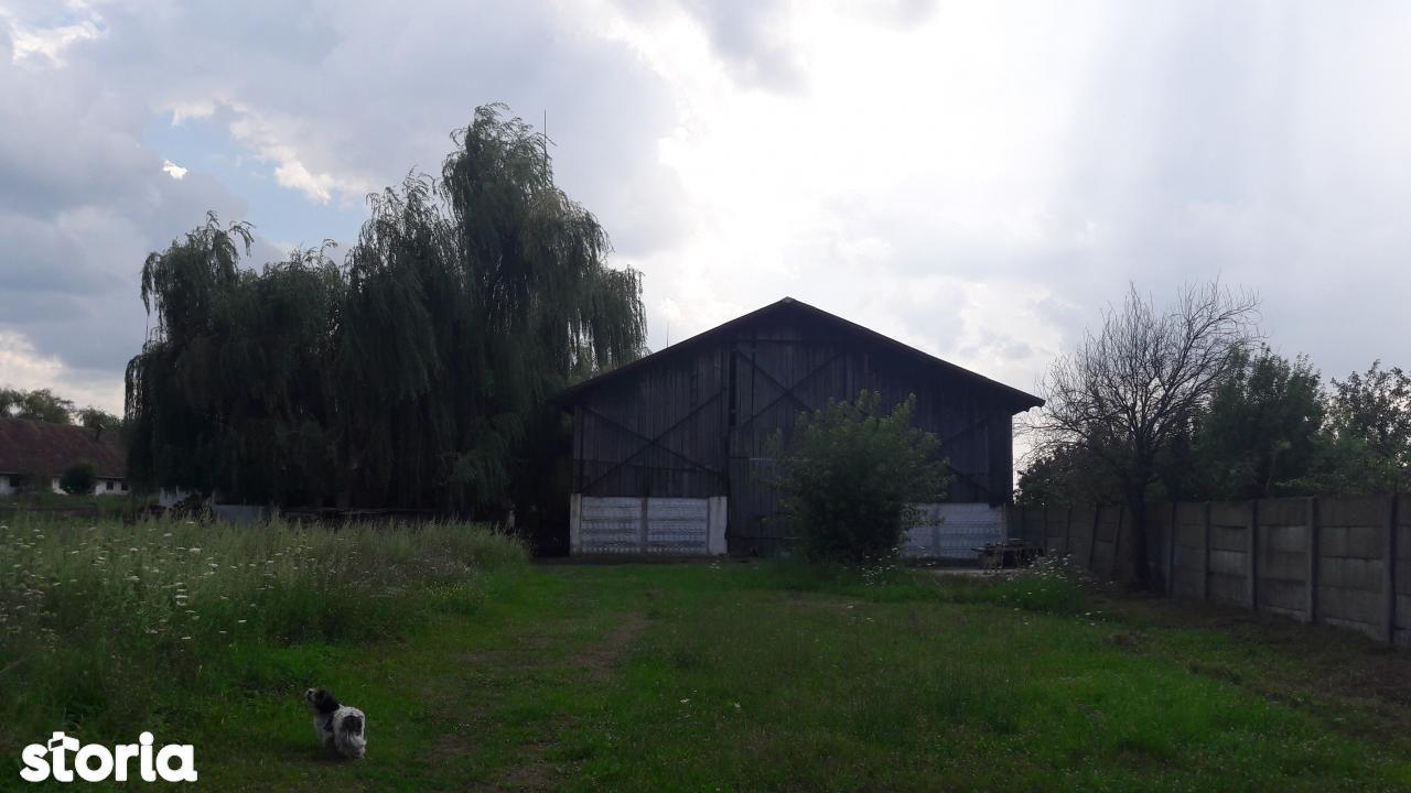 Depozit / Hala de vanzare, Timiș (judet), Remetea Mare - Foto 5