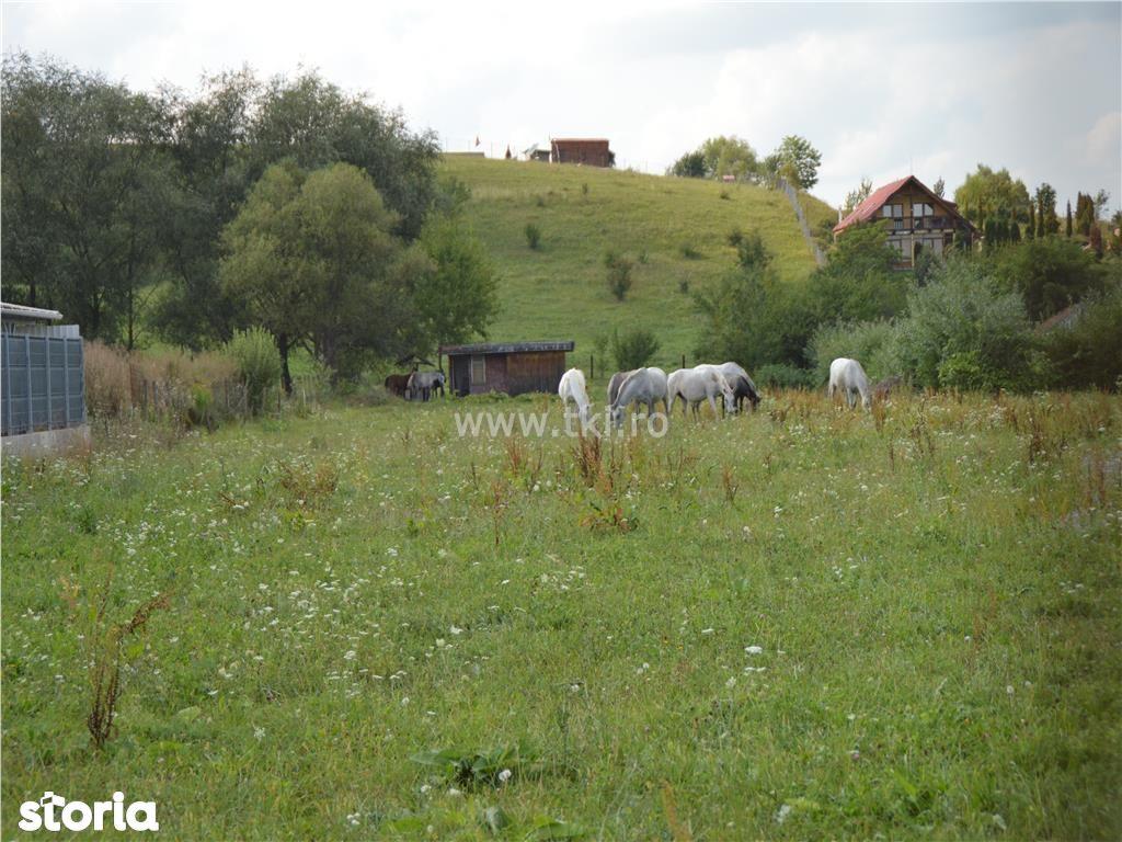 Teren de Vanzare, Sibiu (judet), Cisnădie - Foto 2