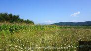 Teren de Vanzare, Vâlcea (judet), Râmnicu Vâlcea - Foto 9