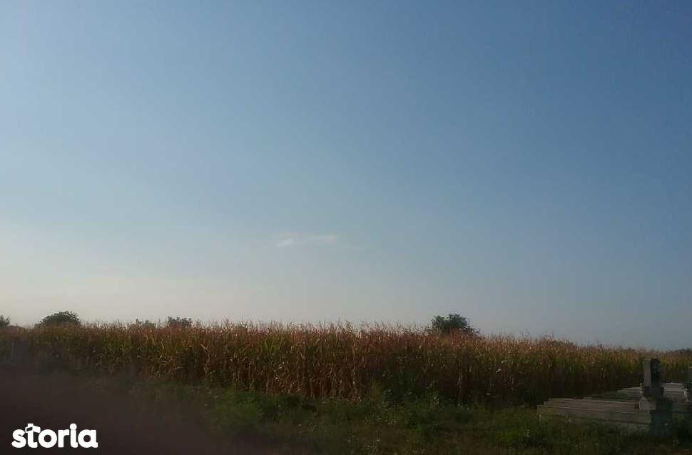 Teren de Vanzare, Satu Mare (judet), Odoreu - Foto 3
