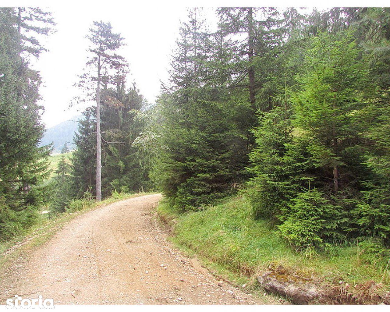 Teren de Vanzare, Brașov (judet), Strada 7 Izvoare - Foto 3