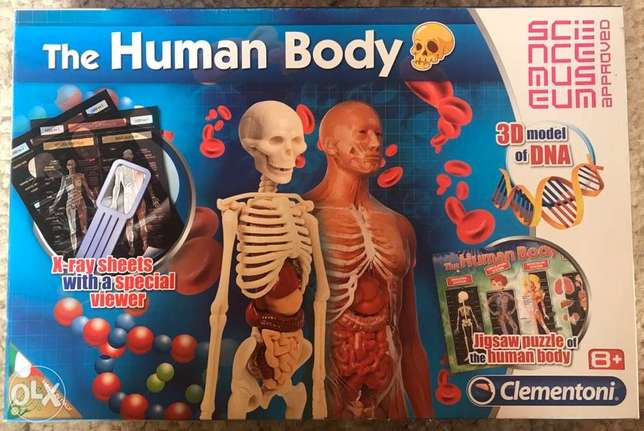 the human body & 3D model of DNA