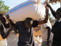 dry clean maize on quick sale