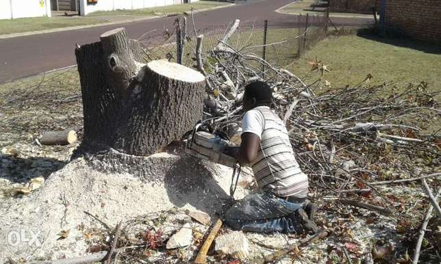 trimming and tree felling Krugersdorp - image 1