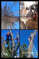 Professional Tree Felling and Removal