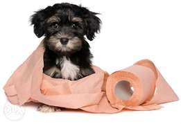 Potty and obedience training for dogs