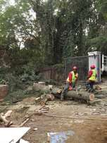 Professional Tree fellers - we remove any unwanted tree
