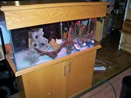 Fish Tank at bargain Price
