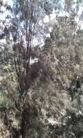 Approx 40 acres prime land,serviced with clean title.
