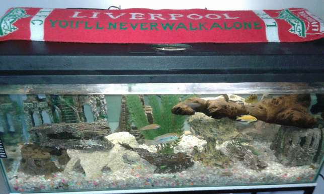 Fish tank with accessories for sale Shallcross - image 3
