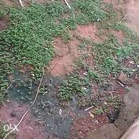 6 plots of land at isheri good place not far from the major road. C of
