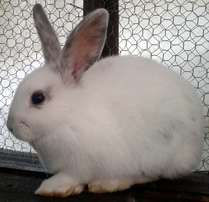 Only 5 baby bunny rabbits left… in step with Easter... come view now!
