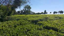 100 acres Land for sale in Limuru Karirana with tea